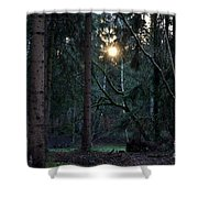 Forest Magic 7 Shower Curtain