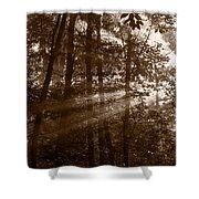 Forest Mist B And W Shower Curtain