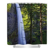 Forest Mist Shower Curtain by Chad Dutson