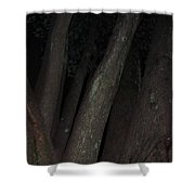 Forest Nightscape Shower Curtain