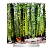 Forest Of The Crossroads Shower Curtain