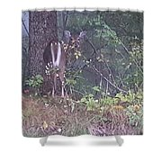 Forest Peek A Boo Shower Curtain