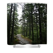 Forest Path At Grafton Notch State Park Shower Curtain