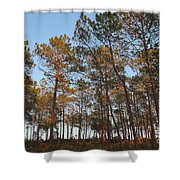 Forest Pine Trees At Sunset Shower Curtain