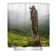 Forest Remnant Shower Curtain