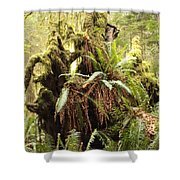 Forest Revival Shower Curtain