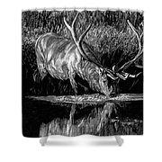Forest Royal Bull Elk Shower Curtain
