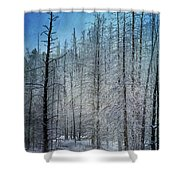 Forest Secrets  7917 Shower Curtain