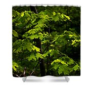 Forest Shades Shower Curtain
