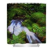 Forest Stream. Benmore Botanic Garden Shower Curtain