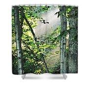 Forest Sunbeam Shower Curtain