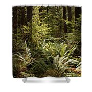 Forest Sunlight And Shadows  Shower Curtain