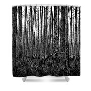 Forest Thru The Trees Shower Curtain