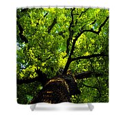 Forest Top Shower Curtain