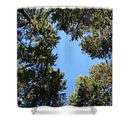 Forest Treetops Shower Curtain