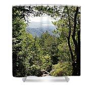 Forest View From Mt Tamalpais Shower Curtain