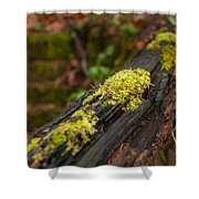 Forest Woods Shower Curtain