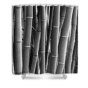 Forested Shower Curtain