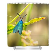 Forester Moth From Bulgaria Shower Curtain