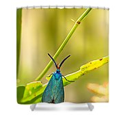 Forester Moth  Shower Curtain