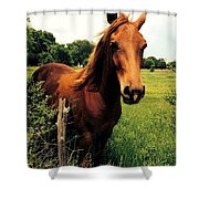 Forever Freedom Shower Curtain