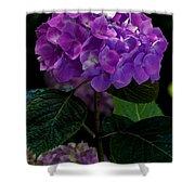Forever Violet Shower Curtain