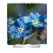 Forget -me-not 3 Shower Curtain