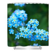 Forget -me-not 4 Shower Curtain