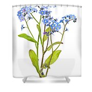 Forget-me-not Flowers On White Shower Curtain