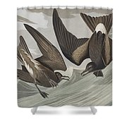 Fork-tail Petrel Shower Curtain