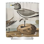 Fork-tailed Gull Shower Curtain