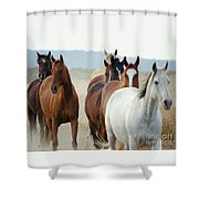 Form Two Lines Shower Curtain