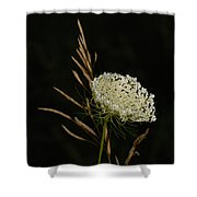 Formal Queen Anne's Lace Study Portrait Shower Curtain