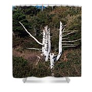 Forms In Nature Shower Curtain