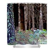 Forrest Shower Curtain