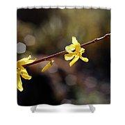 Forsythia Flowers Shower Curtain by Helga Novelli