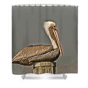 Fort Pierce Pelican Shower Curtain