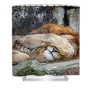 Fort Worth Zoo Sleepy Lion Shower Curtain by Robert Bellomy