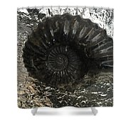 Fossil 91,000,000 Years Shower Curtain