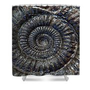 Fossil Ammonite - Dactylioceras Shower Curtain