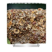 Fossil Fuel Shower Curtain