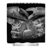 Fossil: Miocene Crab Shower Curtain