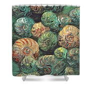 Fossil Shells Shower Curtain