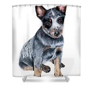 Foster Shower Curtain