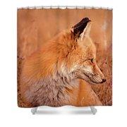 Found Fox Shower Curtain