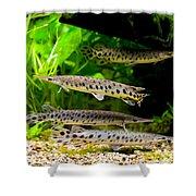 Four Aquarium Fishes In Zoo Shower Curtain