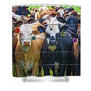 Four At The Fence Shower Curtain