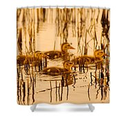Four Baby Duckies Shower Curtain