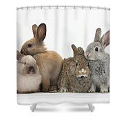 Four Baby Rabbits Shower Curtain