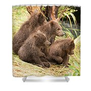 Four Bear Cubs Looking In Same Direction Shower Curtain